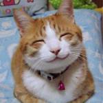 514px-So_happy_smiling_cat